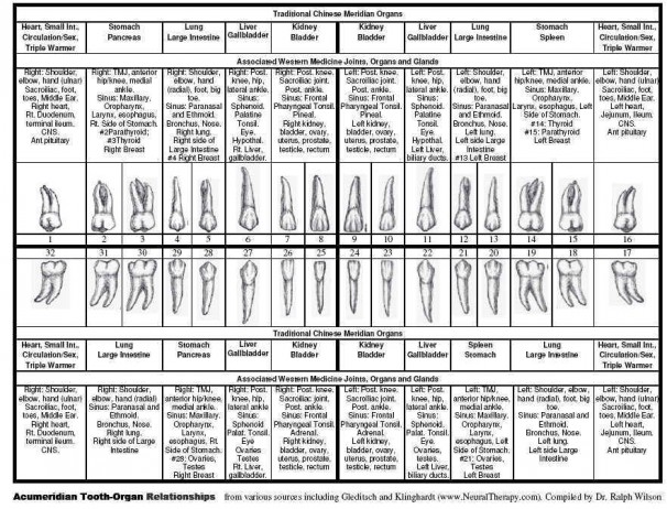 Meridian Tooth Body Chart